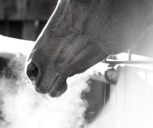 rhinopneumonie cheval Horse nutrition project HNP